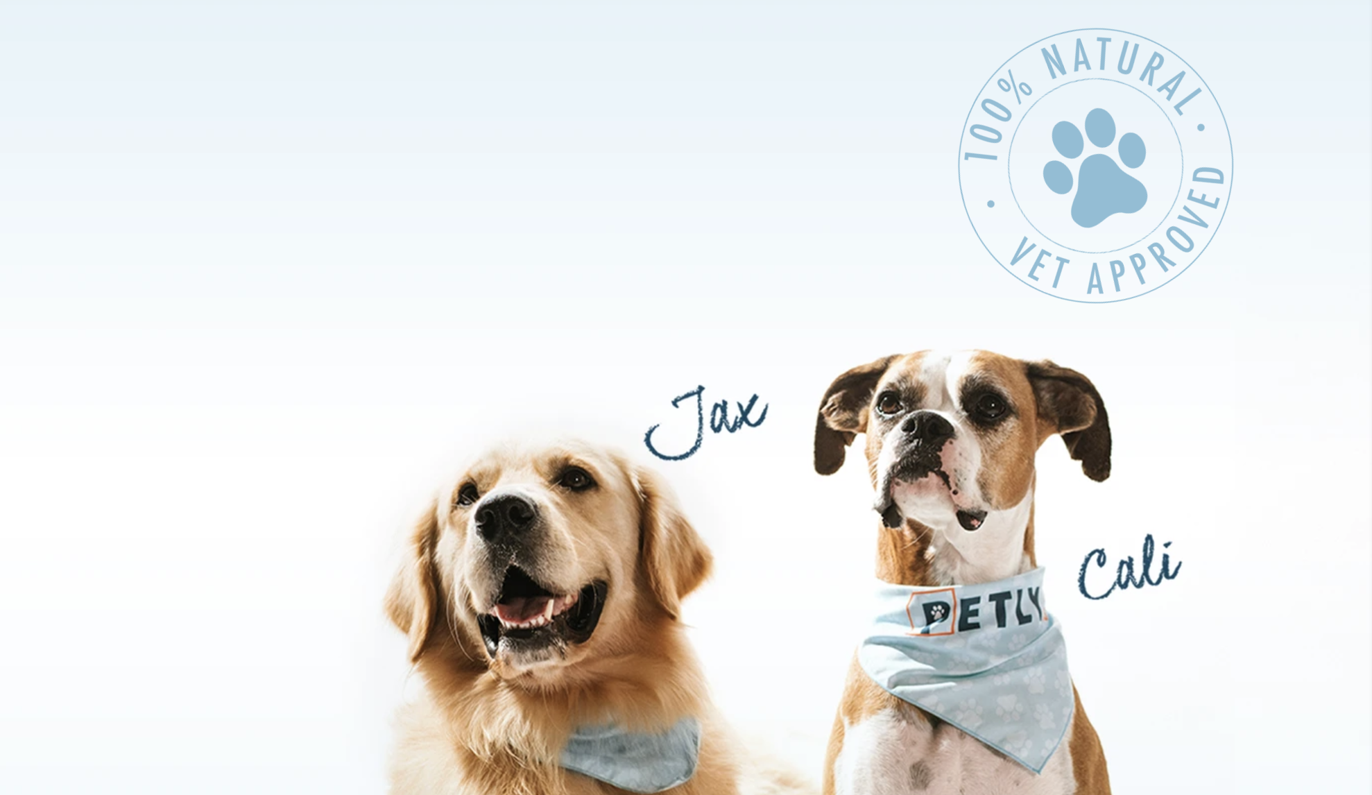 Petly CBD oil for dogs review